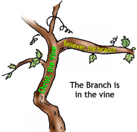 10_branch-in-vine