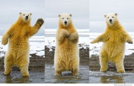 polar-bear-dancing