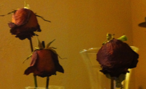 roses-after