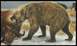 bear overa bull