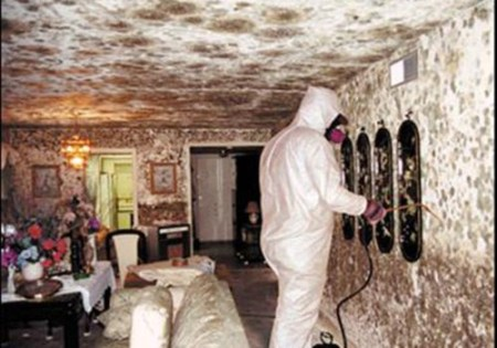black-mold-treatment